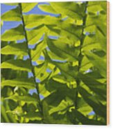 Fern Fronds Against Blue Sky Wood Print