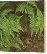 Fern Garden Wood Print