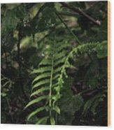 Fern Green Wood Print