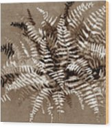 Fern In Sepia Wood Print