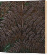 Fern Kaleidescope Wood Print