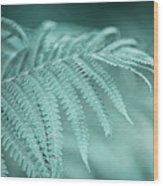 Fern Leaves Abstract 1. Nature In Alien Skin Wood Print