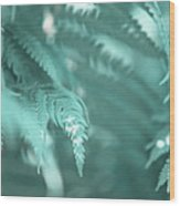 Fern Leaves Abstract 4. Nature In Alien Skin Wood Print