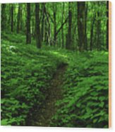 Fern Lined At In Ma Wood Print