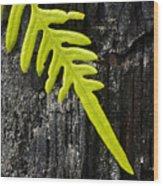 Fern On Burnt Log Wood Print