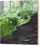 Fern On Redwood Tree Art Print Baslee Troutman Wood Print