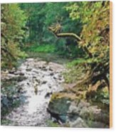 Fern River Oregon Wood Print