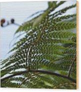 Fern Tree Frond Wood Print