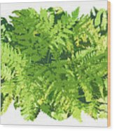 Fern Vignette Wood Print by JQ Licensing