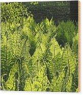 Fernery Wood Print