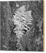 Fernglow Wood Print