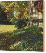 Fernhill Gardens, Co Dublin, Ireland Wood Print