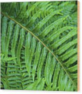 Ferns After A Spring Rain Wood Print