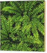 Ferns After The Rain Wood Print