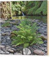 Ferns Along Banks Of Eagle Creek Wood Print