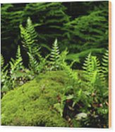 Ferns And Moss On The Ma At Wood Print