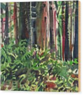Ferns And Redwoods Wood Print