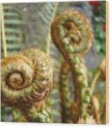 Ferns Art Print Forest Fern Artwork Canvas Baslee Troutman Wood Print