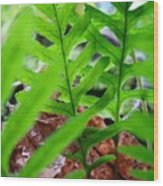 Ferns Art Prints Forest Ferns Giclee Art Prints Basle Troutman Wood Print