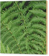 Ferns Au Naturale Wood Print