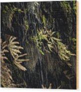 Ferns Below Falls By Jean Noren Wood Print