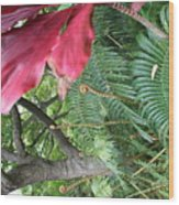 Ferns Come Alive Wood Print