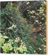 Ferns II Wood Print