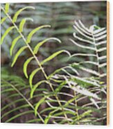 Ferns In Natural Light Wood Print