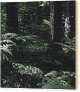 Ferns In The Forest Wc Wood Print
