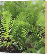 Ferns Of The Forest Floor Wood Print