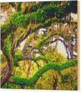 Ferns On Florida Oaks Wood Print