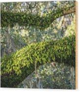 Ferns On Live Oak Wood Print