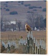 Ferruginous Hawk And Meadowlark Wood Print