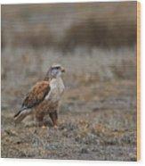 Ferruginous Hawk In Field Wood Print