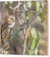 Ferruginous Pygmy-owl Wood Print