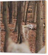 Fetch Wood Print