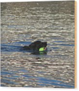 Fetch  Swimming 2 Wood Print by Hasani Blue