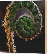 Fiddlehead Wood Print