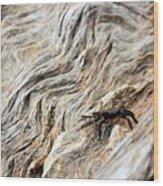 Fiddler Crab On Driftwood Wood Print