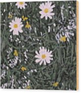 Field Daisies Wood Print