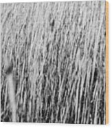 Field Grasses Wood Print