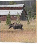 Field Moose Wood Print