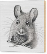 Field Mouse Or Meadow Vole Wood Print