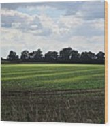Field Near Coswig Wood Print