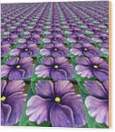 Field Of African Violets Wood Print