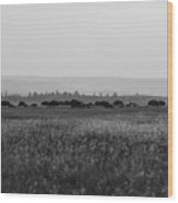 Field Of American Bison Bw Wood Print
