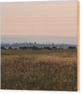 Field Of American Bison  Wood Print