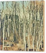 Field Of Birch Wood Print