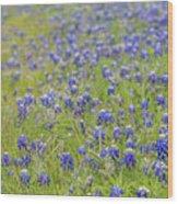 Field Of Blue Bonnet Flowers Wood Print