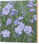 Field Of Blue Wood Print